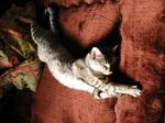 wintercat1.jpg